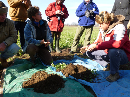 Biodynamic and conventional soil