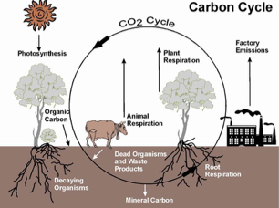 the-story-of-carbon