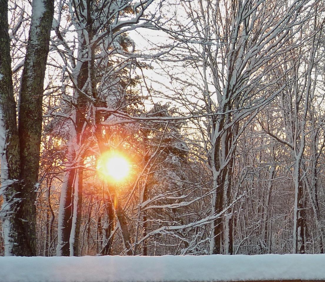 Festival of Light - Winter Sun through the Trees