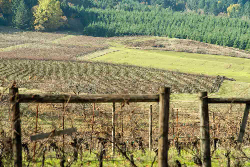 Biodynamic Winemaking Intensive at Montinore Estates