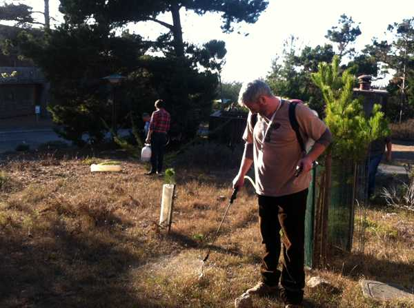 Colum Riley sprays compost tea on Asilomar plantings